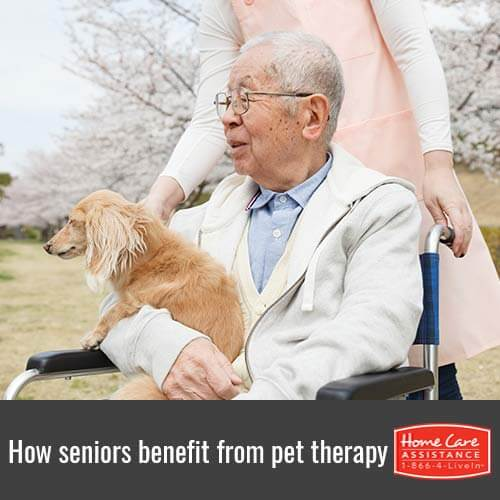 How the Elderly Benefit from Pet Therapy in Dayton, OH